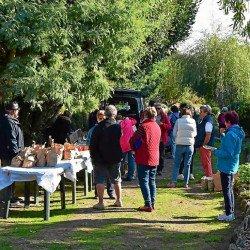 Agapanthe: Une fête de la pomme
