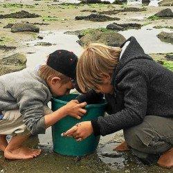 Pêche à pied : les bons et mauvais gestes
