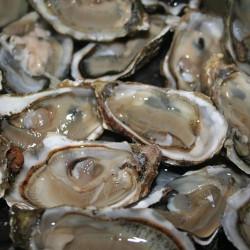 Des huîtres contaminées par un virus dans la baie de Quiberon